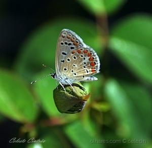 /Linda borboleta eu sou,linda rosa ele será.