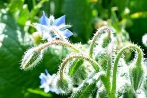 Outros/Flores do campo