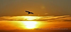 /Rumo ao Sol.... (ler sff)