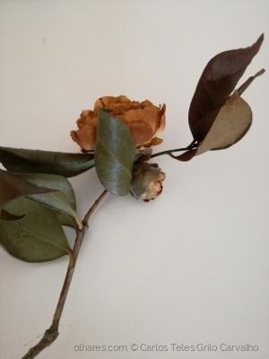Outros/A flor e a melancolia do tempo que passou