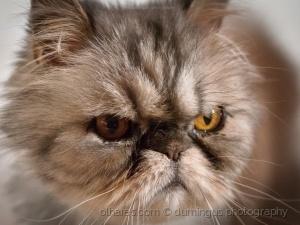 /Gabriel's cat...