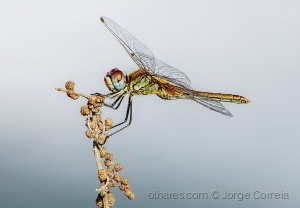 Outros/Dragonfly