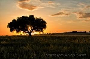 /apenas paisagem ...