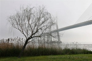 /Fotografando a ponte com nevoeiro (Lisboa)