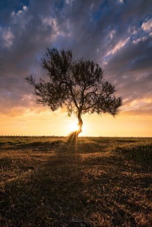 /Heart Tree