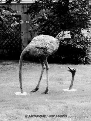 """Gentes e Locais/Photo #2113 ... """"POV de avestruz"""" (Ler)"""