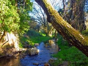 /As águas calmas de um riacho