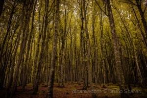 /Floresta