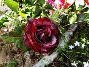 /Flor bela