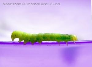 /Larva