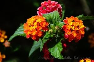 /Mudanças de humor e cor num exemplo vegetal