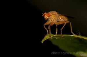 /Mosquito