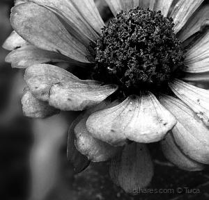 /A Flower