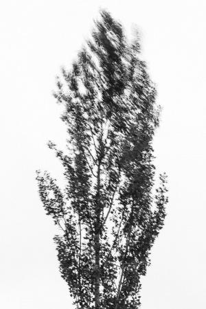 Abstrato/Novo blog post - LER