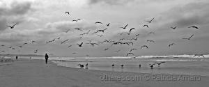 Paisagem Natural/O pensamento é como uma gaivota
