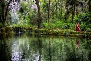 /Meio Ambiente é vida preserve-o !
