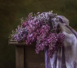 Outros/Lilac