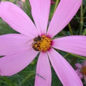 /Abelha na flor - Jardim do Zoológico de Bauru