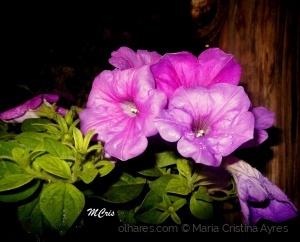 /Domingo com flores.... MCris