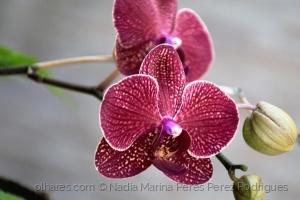 Outros/Cada orquídea uma poesia....