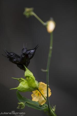 /Da Flor a Semente