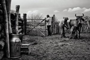 Fotojornalismo/Cotidiano do vaqueiro...