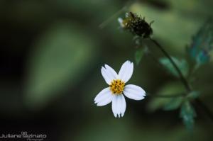 /Flor do Mato (Ler)