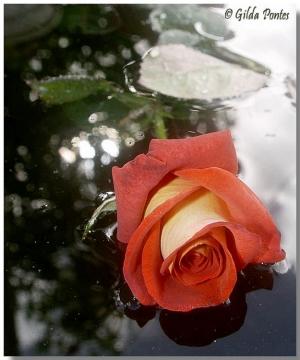 Outros/Acalanto da rosa...