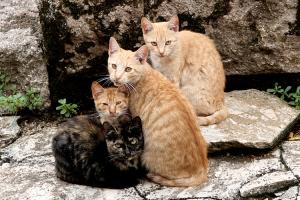 Animais/miradas felinas