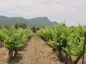 Outros/Vinhas da Provence, França