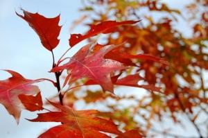 Macro/cores de outono