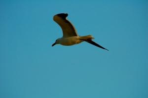 Outros/Pássaro