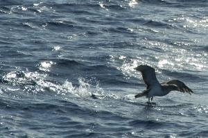 /no mar dos Açores