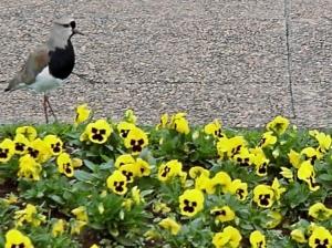 /Jardim Botânico, Curitiba
