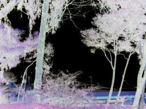 /napalm tree