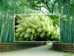 /Floresta de Bambú