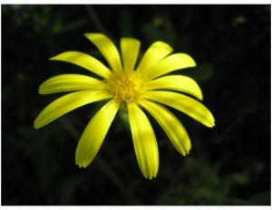 /mais uma amarela...