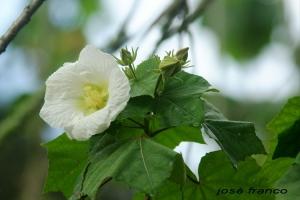 /Flor 1