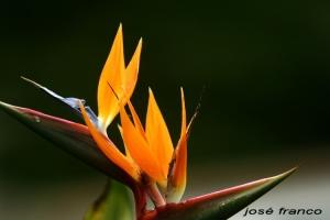 /Flor 2