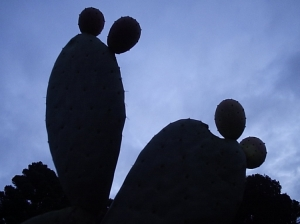 /cactus??