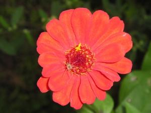 /Detalhe na Flor