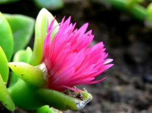 /Flor 4