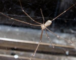 /Spider