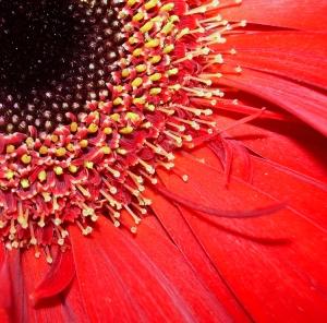 /Outra Perspectiva de uma Flor