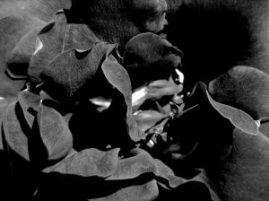 /black velvet