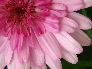 /rosados