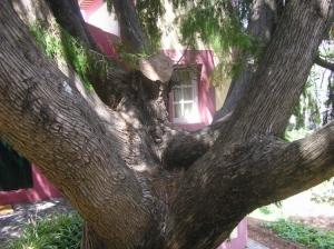 /Colo arbóreo