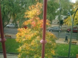 /Ao passo do cair da folha...