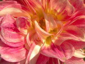 /As cores das flores