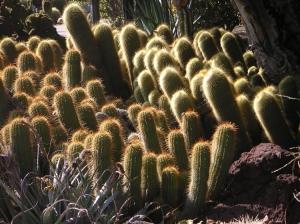 /Luz de outubro: notocactus leninghausii